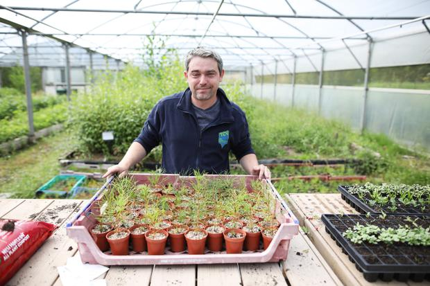 Chris Murray tends to his plants at the Clandeboye Estate in Bangor