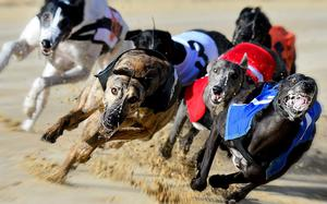 Sir Boley, raced to victory in the Aidan McAllister Greyhound Transport and DTSC first semi-final (525) on Saturday night (stock photo)