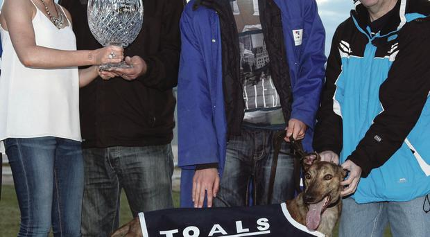 Top dog: Atitboy stole the show at the Northern Irish Derby for trainer Ronnie McKeown, his stepson Nigel Bain and owner Dudley Wilmott, who couldn't attend the final