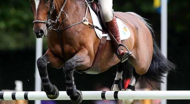 Raising the bar: Captain Michael Kelly onboard Ringwood Glen at the Dublin Horse Show