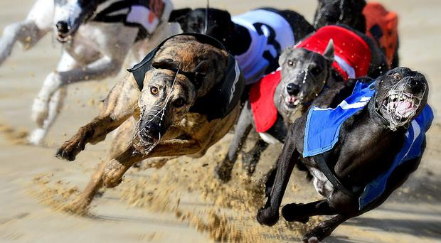 Jimmy's Sham has recorded his win best win to date in 28.68 secs (stock photo)
