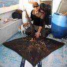 Fisherman's tail: Terry Jackson with his magnificent 116lbs Skate