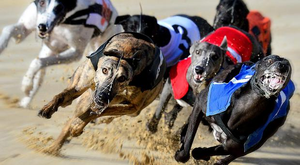 Mervin My Friend won the prestigious Robert Connolly Memorial Tri-Distance final (575) at Drumbo Park (stock picture)