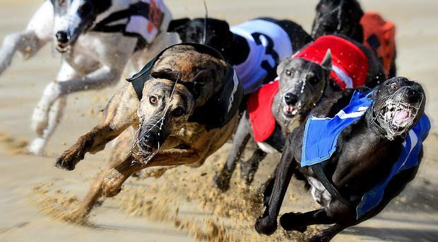 The form clues pointed to Sherlock taking the Jackie McCann Memorial final worth £1200 at Drumbo Park on Saturday night and there was no more popular victor than David Ritchie's Portavogie-based black dog who started evens favourite. (stock photo)