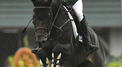 Derry horseman David Simpson has won the Leading Showjumper of the Year title at the Horse of the Year show in the NEC, Birmingham.