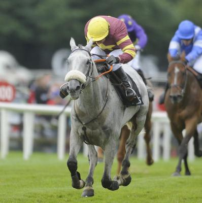 Gordon Elliott says Chicago Grey, pictured, is a 'better horse than last year'