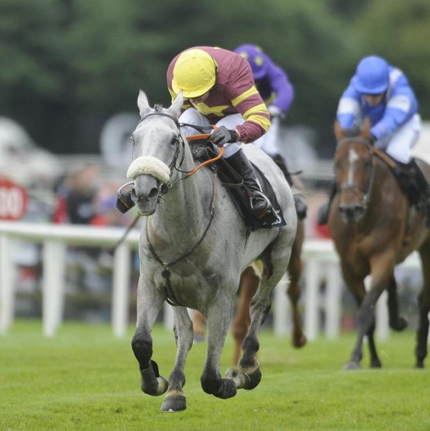 Chicago Grey ran out at 25-1 winner of the Red Mills Chase