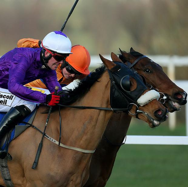 Shield (orange colours) sneaks up the inside of Grecian Tiger to land the bumper