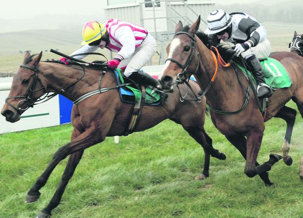 Golden Firth, ridden by Kevin Sexton, wins at Downpatrick