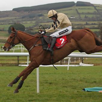 Back In Focus is one of four entries for Willie Mullins in the RSA Chase