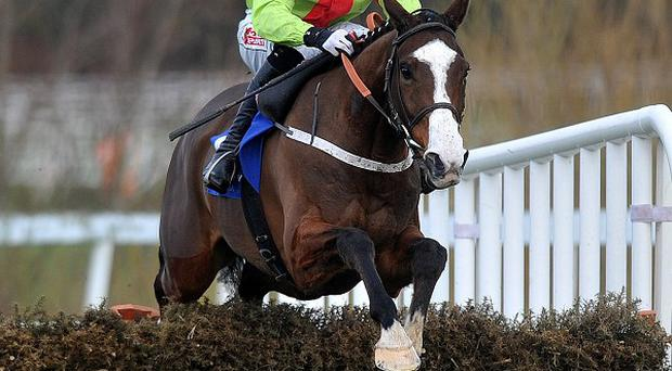 Our Conor is a big hope for the JCB Triumph Hurdle