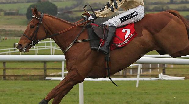 Back In Focus got up late to win the John Oaksey National Hunt Chase