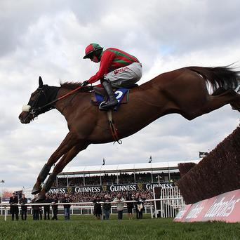 Benefficient, a son of Beneficial, winning at Cheltenham
