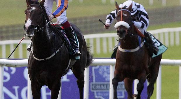 Battle Of Marengo wins the Beresford Stakes