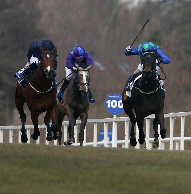 Focus On Venice (right) holds off Michaelmas