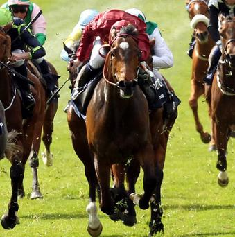 Just The Judge will bid for glory in the Irish 1000 Guineas