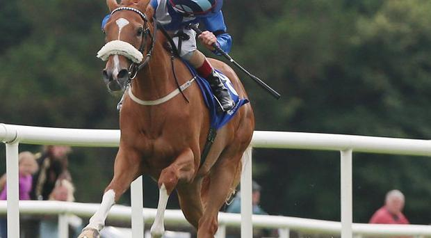 Tarfasha leads the way home under Pat Smullen