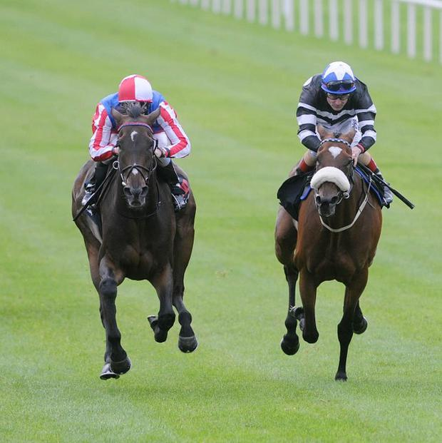 Royal Diamond holds Voleuse De Couers (right) in the Irish Leger Trial