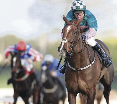 Gambling Girl (pictured) won the supporting feature at Down Royal, ahead of stablemate Jezki's triumph in the big one