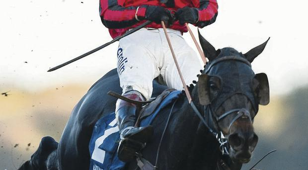 Hang on: Richard Johnson has his hands full on board Duke Of Lucca at Ascot