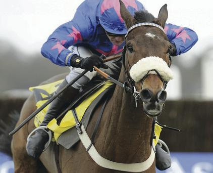 Challenge: Cue Card will miss Cheltenham but should race at Aintree