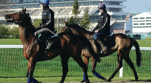 Jack Madden on Hurricane Fly leads Gail Carlisle and Quevega to gallops at Cheltenham yesterday