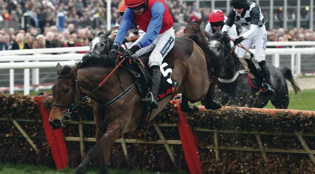 Cleared: Quevega, ridden by Ruby Walsh, en route to winning on the opening day of the 2012 Cheltenham Festival