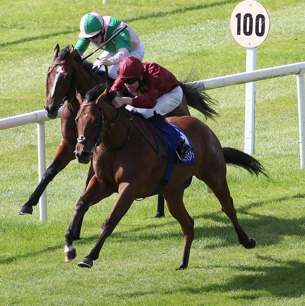 Obliterator, right, could run at Leopardstown on Sunday