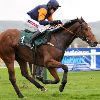 Rebel Fitz will run at Cork on Thursday
