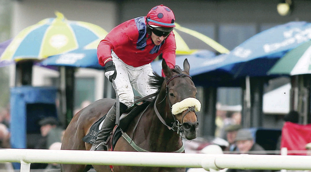 Carpet Elegance, ridden by Eddie O'Connell, comes home triumphant