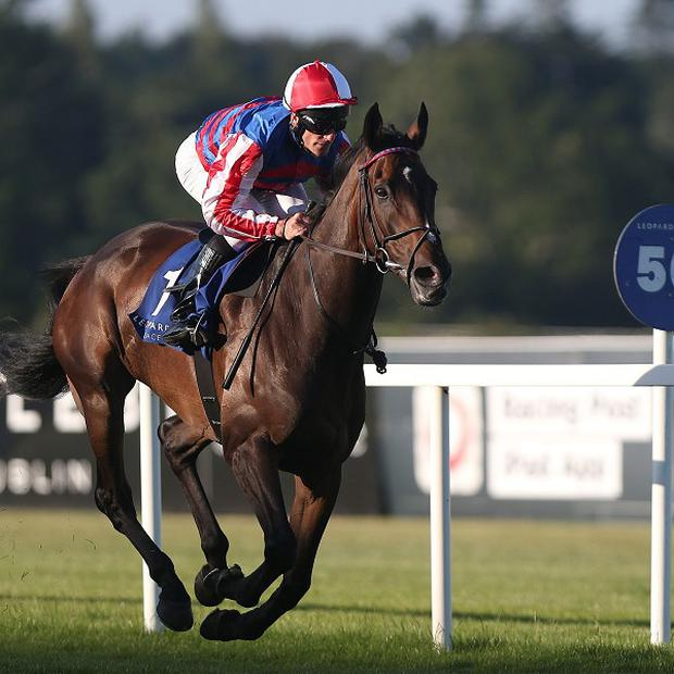 Royal Diamond will make his seasonal debut in the Coolmore Vintage Crop Stakes