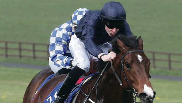 Well beaten: War Envoy had to settle for third spot yesterday after being defeated by Kool Kompany and Toscanini