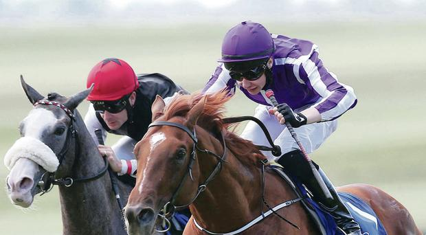 Top tip: Australia (right), with Joseph O'Brien aboard, wins at the Curragh and is favourite for today's Derby