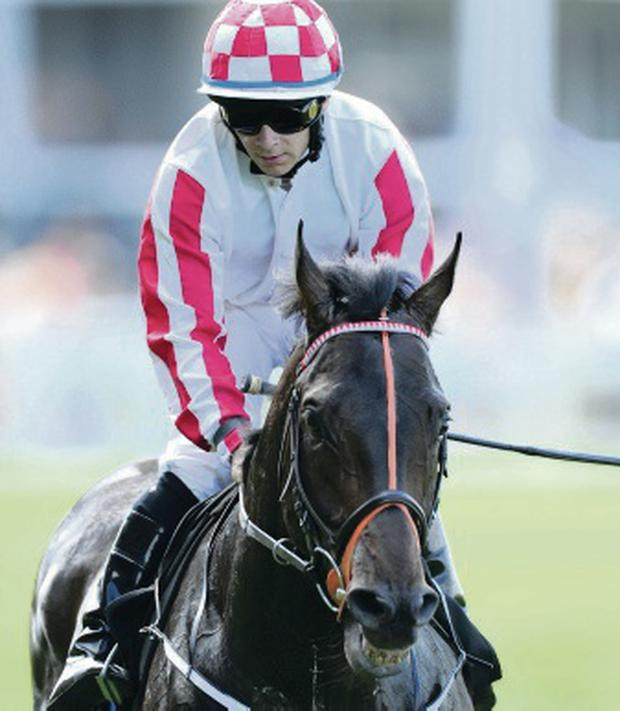 Out in front: Wayne Lordan rode Slade Power to victory