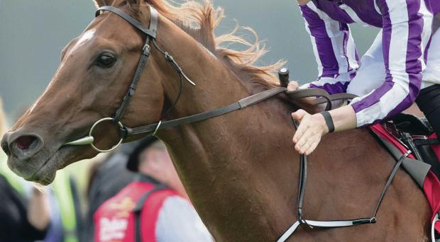 Well done: Joseph O'Brien gives his horse Australia a pat after winning Saturday's Irish Derby at The Curragh