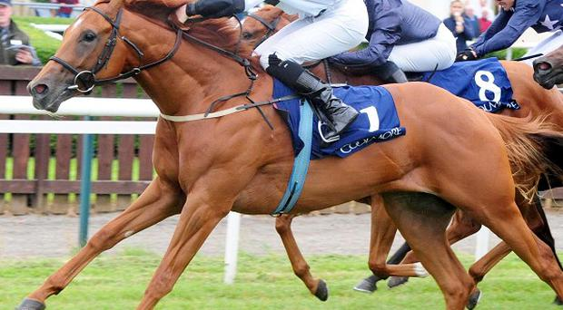 Accepted (left) wins at Tipperary