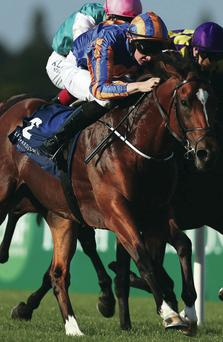 Go Joe: Joseph O'Brien, winning last night's Leopardstown feature on Gleneagles, has a cracking book of rides at Down Royal