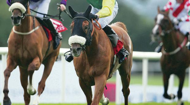 Quick of the mark: Stephen Clements rides Quick Jack to victory at the Galway Festival
