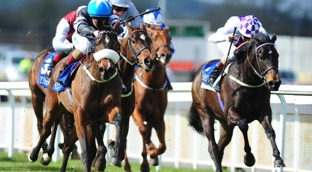 Beach Belle, left, landed the opening juvenile maiden of the year in March before following up with a Listed success in June