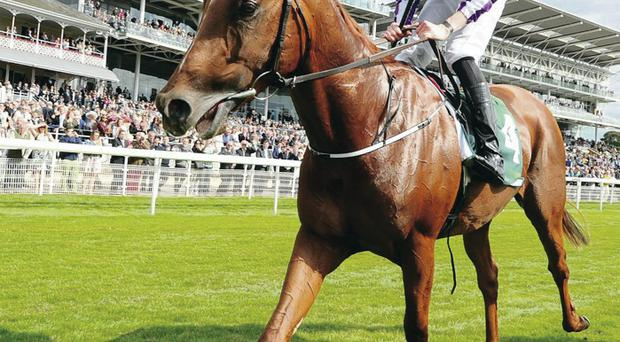 Wizard of Oz: Australia, with Joseph O'Brien in the saddle, after winning the Group One Juddmonte International at York