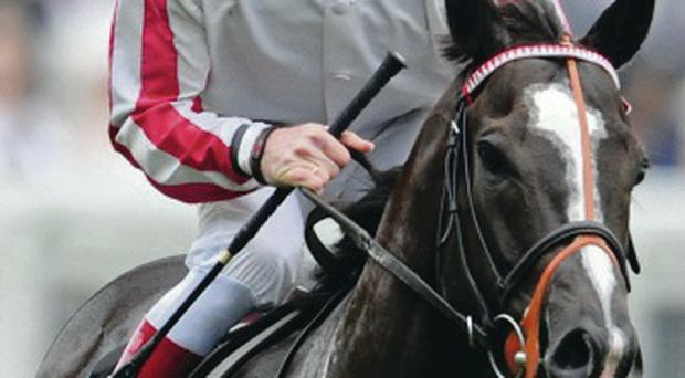 In the running: Sole Power is fancied to win the Sprint Cup
