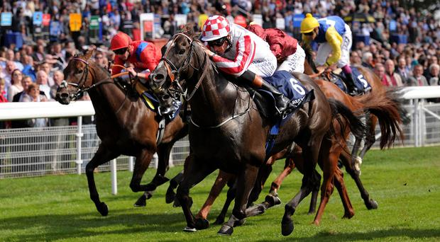 Sole Power has dominated the five-furlong division this season