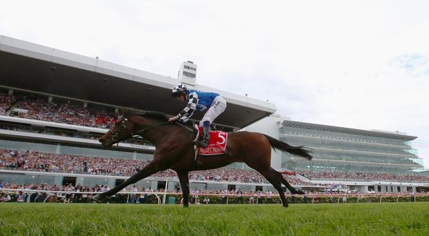 Out in front: Ryan Moore rides Protectionist to victory in the ill-fated Melbourne Cup yesterday at Flemington