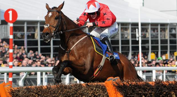 High hopes: Sam Twiston-Davies rides Ptit Zig at Cheltenham