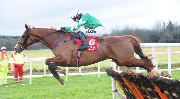 Paul Townend is clear at the final flight on Bosman Rule