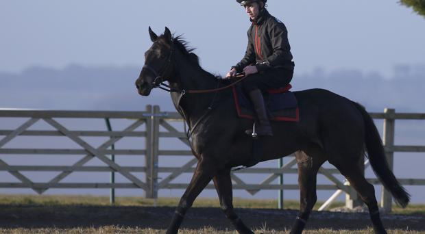 Staying power: Many Clouds has proved his stamina by winning the Hennessy Gold Cup and Argento Chase