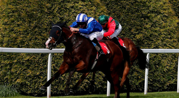 Victory trail: Dane O'Neill, taking Waady to victory at Sandown yesterday, can triumph on board Aljamaaheer at Leicester