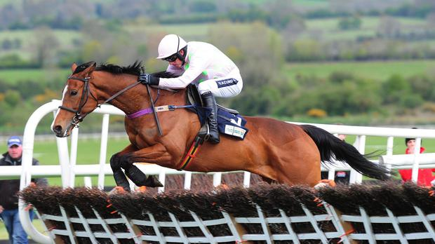 Faugheen puts in another slick jump at the final flight