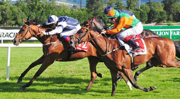 Enjoy Yourself holds on to make a winning debut at Gowran Park