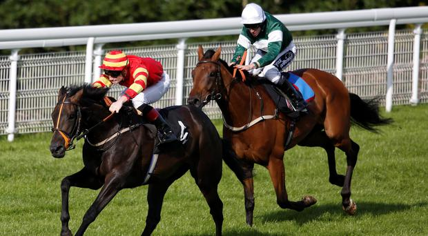 Out in front: Gale Force, Freddy Tylicki aboard, wins Royal Sussex Regiment Stakes at Goodwood